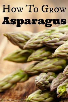 How To Grow Asparagus | areturtosimplicity.com