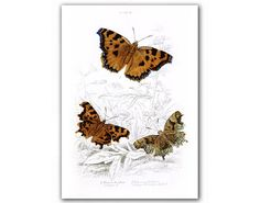 Amazing Butterflies Natural History by DejaVuPrintStore on Etsy, $11.90