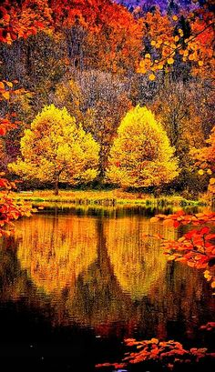 Tree twins in the autumn - with the water reflection a beautiful mood. Beautiful World, Beautiful Places, All Nature, Mellow Yellow, Monet, Beautiful Landscapes, Autumn Leaves, Autumn Trees, Nature Photography