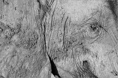 Verkauft als großes Leinwandbild. Danke dem Käufer, er hat Geschmack.   Ingo Gerlach - Elefantenportrait in schwarzweiß