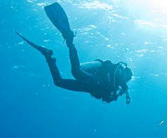 Vidéo HD   Grand reportage - Plongée au contact des énormes requins-tigre des Bahamas !