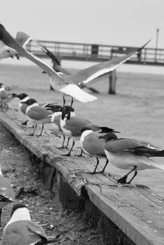Stalker seagulls in Southport!