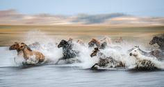 Running Horses by Ke Guo