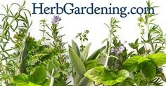 How to grow Herb Gardens indoor and out