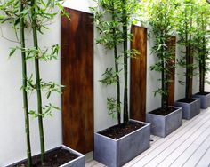 bamboo in planters along fence/wall
