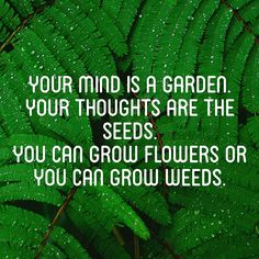 Your mind is a garden. Your thoughts are the seeds. You can grow flowers or you can grow weeds | inspirational quote