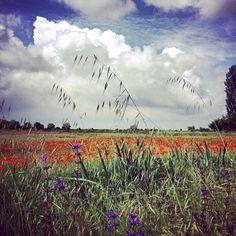 Ocean of flowers in Lido Adriano, Ravenna - Instagram by sereaugy