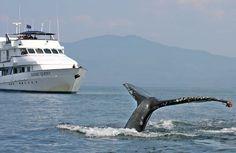 Enjoy Whale~Watching