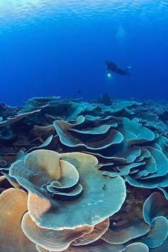 Las algas gigantes del Parque Nacional Marino de Wakatobi, Indonesia | Galería de fotos 33 de 37 | Traveler