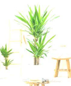 toxic houseplants yucca palm tree