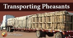 Transporting Pheasants