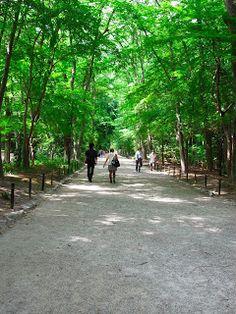 度々行きたい旅。: 京都観光:涼を感じる京の旅:糺の森は世界遺産下鴨神社境内を囲む