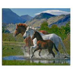 Three horses 60x50cm New 100% Full Area Highlight Diamond Needlework Diy Diamond Painting Kit 3D Diamond Cross Stitch Embroidery #Affiliate