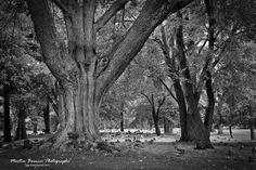 Landscape Photos, Plants, Professional Photographer, Photography, Flora, Plant, Landscape Pictures, Planets