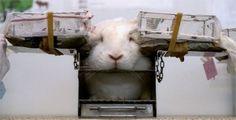 Rabbits deserve much better!
