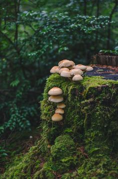 http://wildforestelf.tumblr.com/post/133463488653/millivedder-fairy-tale-stump