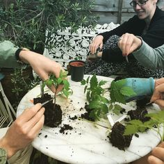 London Food, Supper Club, Food Photo, Garden Inspiration, Tomatoes, Surgery, Gardening, Learning, Plants