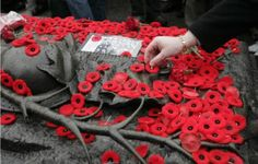 Poppies are placed on the Tomb of The Unknown Soldier during Remembrance Day ceremonies at the National War Memorial in Ottawa. I Am Canadian, Canadian History, Canadian Identity, Remembrance Day Poppy, Some Gave All, Canadian Soldiers, Armistice Day, Flanders Field, Unknown Soldier