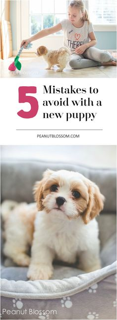 If you're bringing home a new puppy to your kids, you definitely need this great list of 5 mistakes to avoid when introducing the puppy to the children. Training tips, how to sleep through the night, and more great ideas for easing the transition of the new puppy into your home.