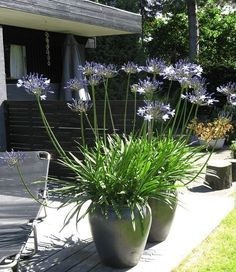 Who says you need a big backyard to garden? Read more here about how to create a beautiful balcony garden if you don't have a yard to garden in. Back Gardens, Small Gardens, Outdoor Gardens, Balcony Garden, Garden Planters, Container Plants, Container Gardening, Tropical Garden, Garden Styles