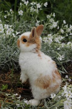 dwarf bunnies - dwarf hamster ` dwarf trees ` dwarf fruit trees ` dwarf ` dwarf bunnies ` dwarf trees for landscaping ` dwarf rabbit ` dwarf evergreen trees Baby Animals Pictures, Cute Animal Pictures, Animals And Pets, Funny Animals, Funny Dogs, Super Cute Animals, Cute Little Animals, Netherland Dwarf Bunny, Dwarf Bunnies