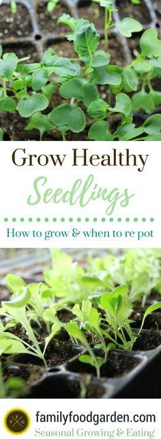 Grow healthy seedlings