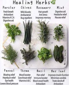 Healing Herbs, Medicinal Plants, Natural Healing, Healing Spells, Herbal Plants, Holistic Healing, Crystal Healing, Holistic Wellness, Herbal Remedies