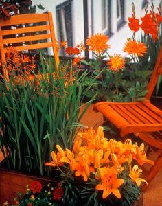 Orange bulbs and flowers. I love orange flowers! Orange Is The New Black, Orange Flowers, Orange Color, Tangerine Color, Orange Orange, Yellow, Dream Garden, Garden Art, Garden Nook