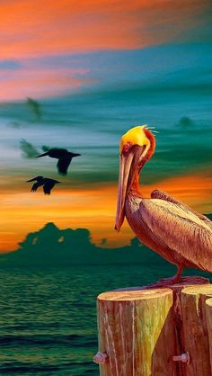 So Crazy Art Wall Art Painting Birds Pelican Photo Flying Across Sea Lever in Sunset Prints On Canvas The Picture Animal Pictures Oil for Home Modern Decoration Print Decor 4k Wallpaper Android, Computer Wallpaper, Pelican Art, Pelican Drawing, Pelican Tattoo, Weird Birds, Sunset Wallpaper, Bird Wallpaper, All Nature