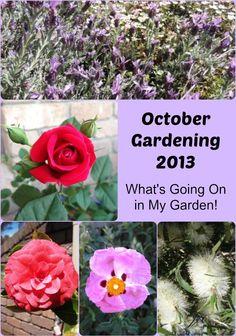October Gardening 2013: What's Going On in My Garden! - The Links Site