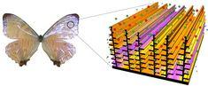 Butterfly Wings Inspire Better Sensors