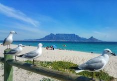 Ocean Blue Best place to be on a sunny Saturday! Table Mountain, Cape Town, Sunnies, Van, Beach, Places, Blue, Animals, Instagram