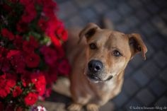 #Dog and Flowers