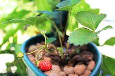 Dá pra cultivar morangos no jardim vertical Espiral! Compre já o seu!