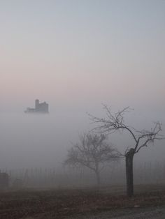 Autumn mists in Nebbiolo territory. Serralunga d'Alba, Italy An itinerary that ends in Serralunga: http://www.winepassitaly.it/index.php/en/travel-wineries-piedmont/maps-and-wine-zones/barolo/itinerary/in-the-heart-of-the-langhe