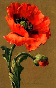 Lovely and vibrant poppy art Flower Images, Flower Art, Cactus Flower, Watercolor Flowers, Watercolor Paintings, Poppies Painting, China Painting, Arte Floral, Red Poppies