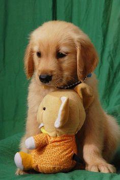 #Animal pet cute dog Like it, Thanks :) See more Cute Pets---> robrayo.com