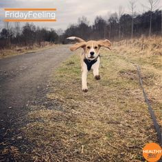 Leap into the weekend like our fur-pal Daisy 🐾🙌 Let us know how your is your pet spending the weekend - sofa surfing or wet walkies? #pets #dogs #cats #HealthyPetsInsurance #fridayfeeling #friyay Healthy Pets, Pet Insurance, Friday Feeling, Your Pet, Daisy, Corgi, Surfing, Sofa, Fur