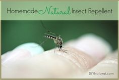 Homemade Mosquito and Insect Repellent - Keep Them Away Naturally : This natural homemade insect repellent is great for mosquitos, flies, and other annoying warm season bugs. Tweak to your liking and apply with confidence.
