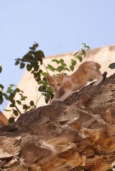 Stray kitty in Morocco http://ift.tt/2dU6Wtx