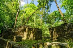 19703347-Trees-growing-out-of-ruins-in-the-jungle-near-Palenque-Stock-Photo.jpg (1300×861)