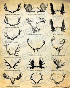 Vintage Deer, Elk, Caribou, Moose Antler and Skull Illustrations Clipart Copyright Free Elk Skull, Deer Skulls, Animal Skulls, Hirsch Tattoo, Deer Tattoo, Deer Antler Tattoos, Hunting Tattoos, Moose Antlers, Skull Illustration