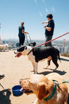 Los Angeles - Climb Hollywood hills with adoptable pups. I'm the co-founder of Free Animal Doctor—a non-profit animal welfare organization. I love dogs, and am passionate about helping humans live up to the image dogs have of us.