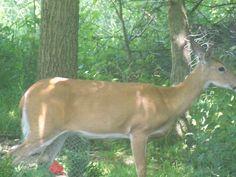 """""""Bambi go home!"""""""