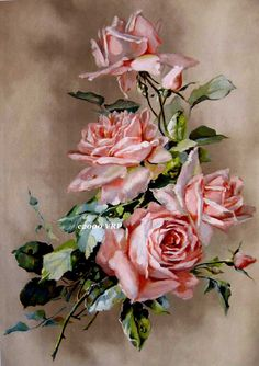 Cabbage Roses Catherine Klein