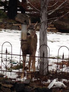 My backyard pet!
