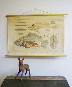 De zoetwatervis. Retro schoolkaart. Oude botanische schoolplaat. | Kunst en Kitsch | Flat Sheep