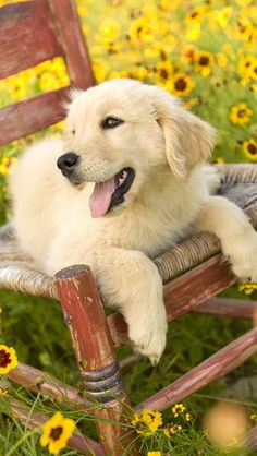 Sweet dog in the sunflowers..
