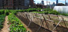 5 Things to Know About Growing in Urban Soils