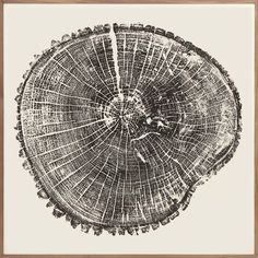 Wood Cross Section 1 | Natural Curiosities